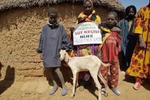 Nijer'de Süt Keçisi Dağıtımı Gerçekleştirdik