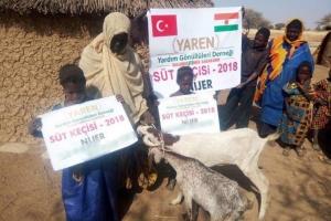 Nijer'de Süt Keçisi Dağıtımlarımız Başladı
