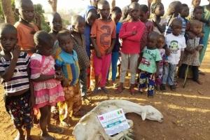Afrika ve Arakan Kamplarında Adak,Akika,Şükür ve Hayır Kurbanları Kesilmeye Devam Ediyor