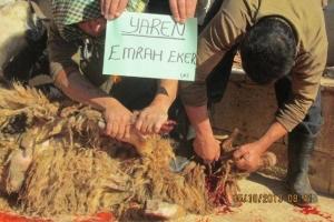 Suriye'de Kurbanlarınız Kesildi